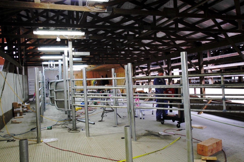 Construction of the Cow Sorting Lanes after being Milked